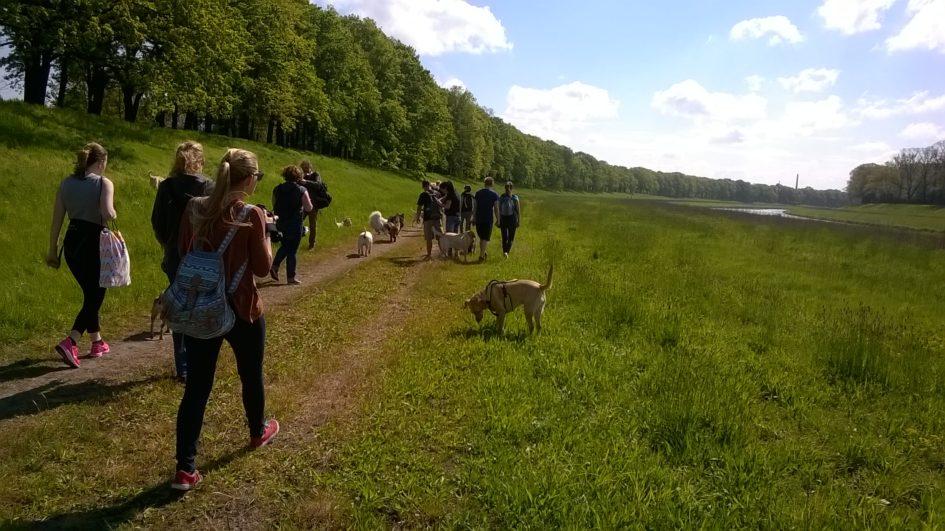 Positive Dog Walk