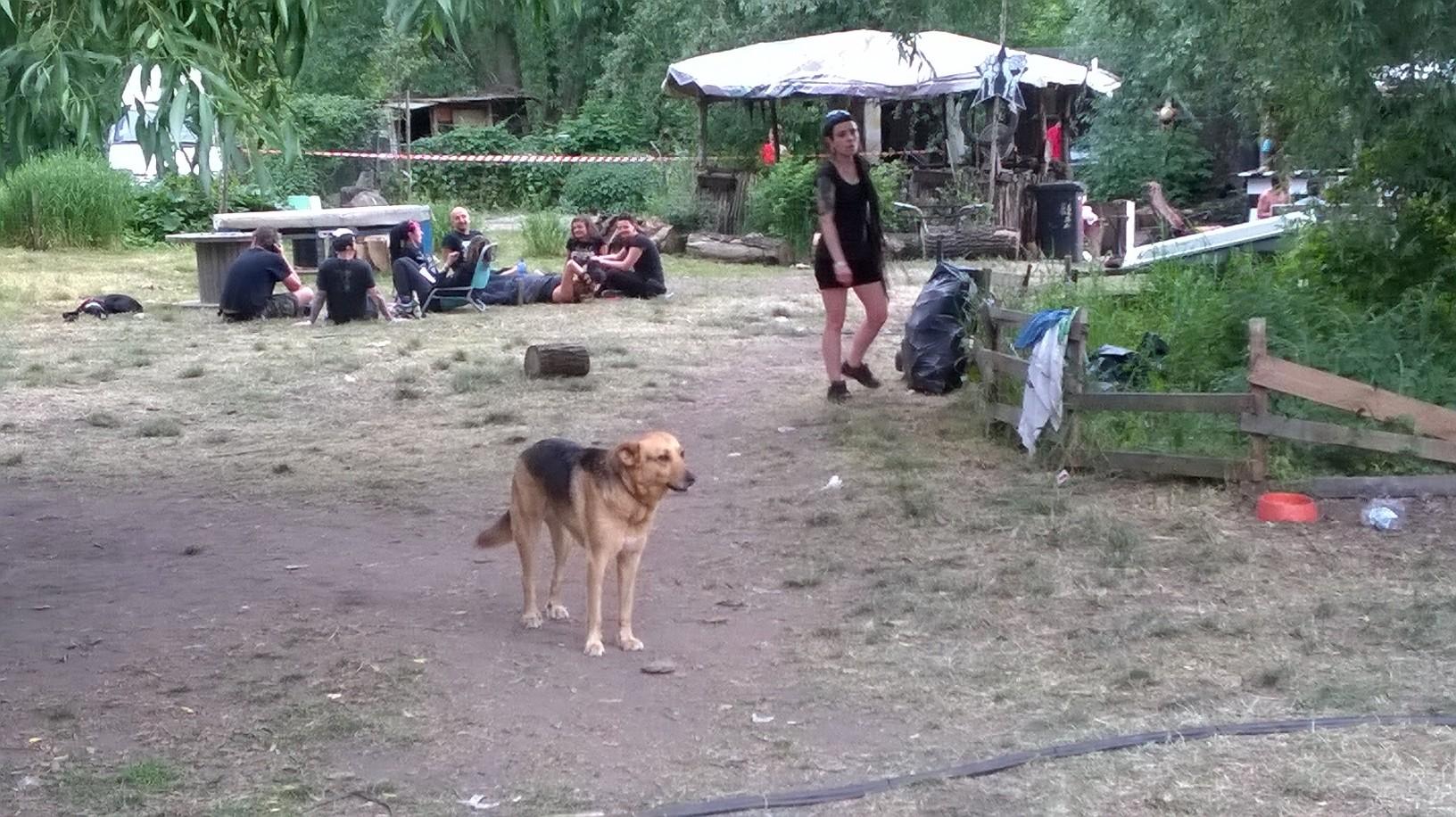 Punx Piknik