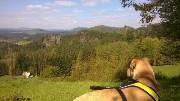 Jetrichovice - Rynartice trip