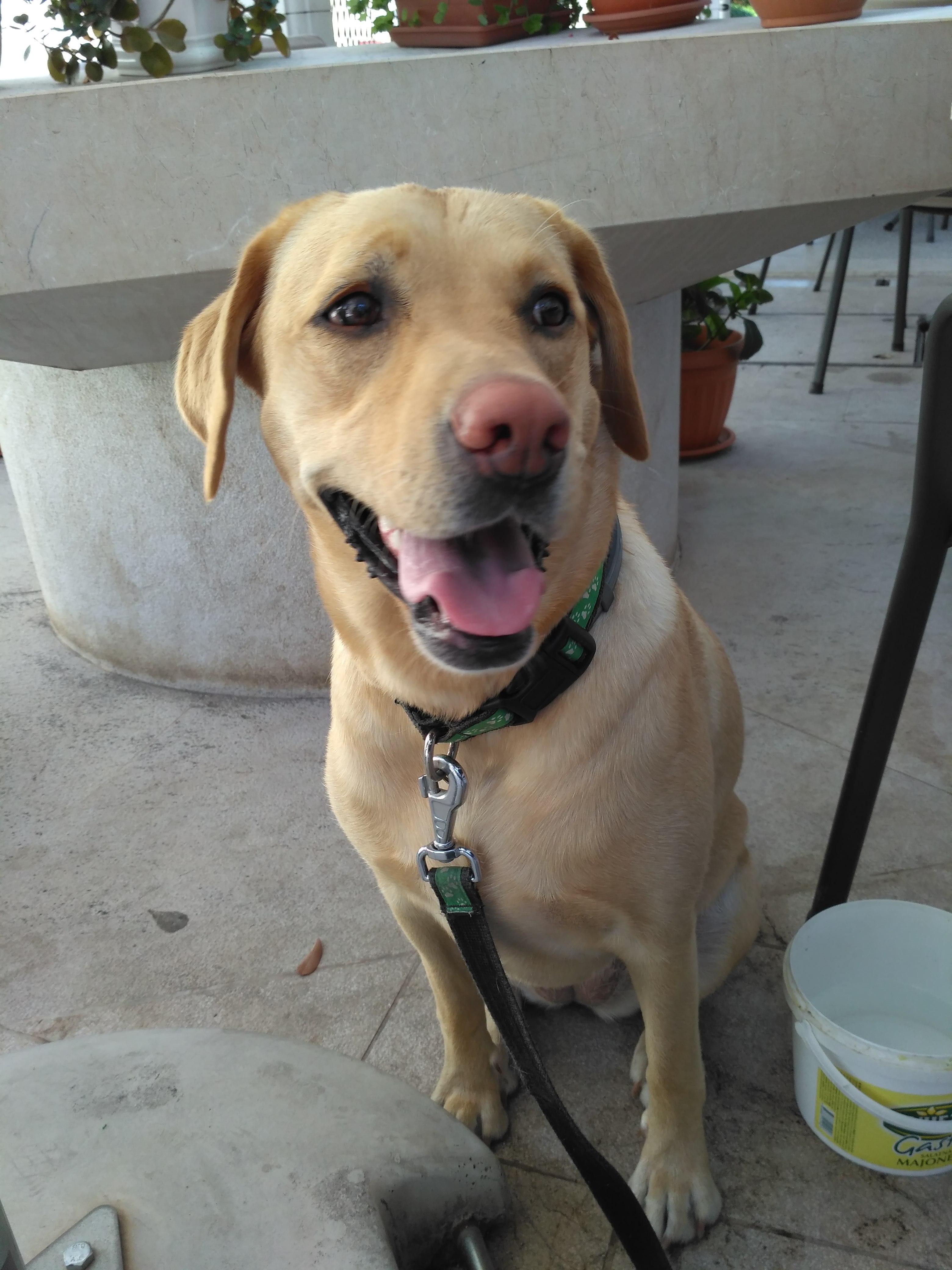 Sunny the unique dog / Szybenik