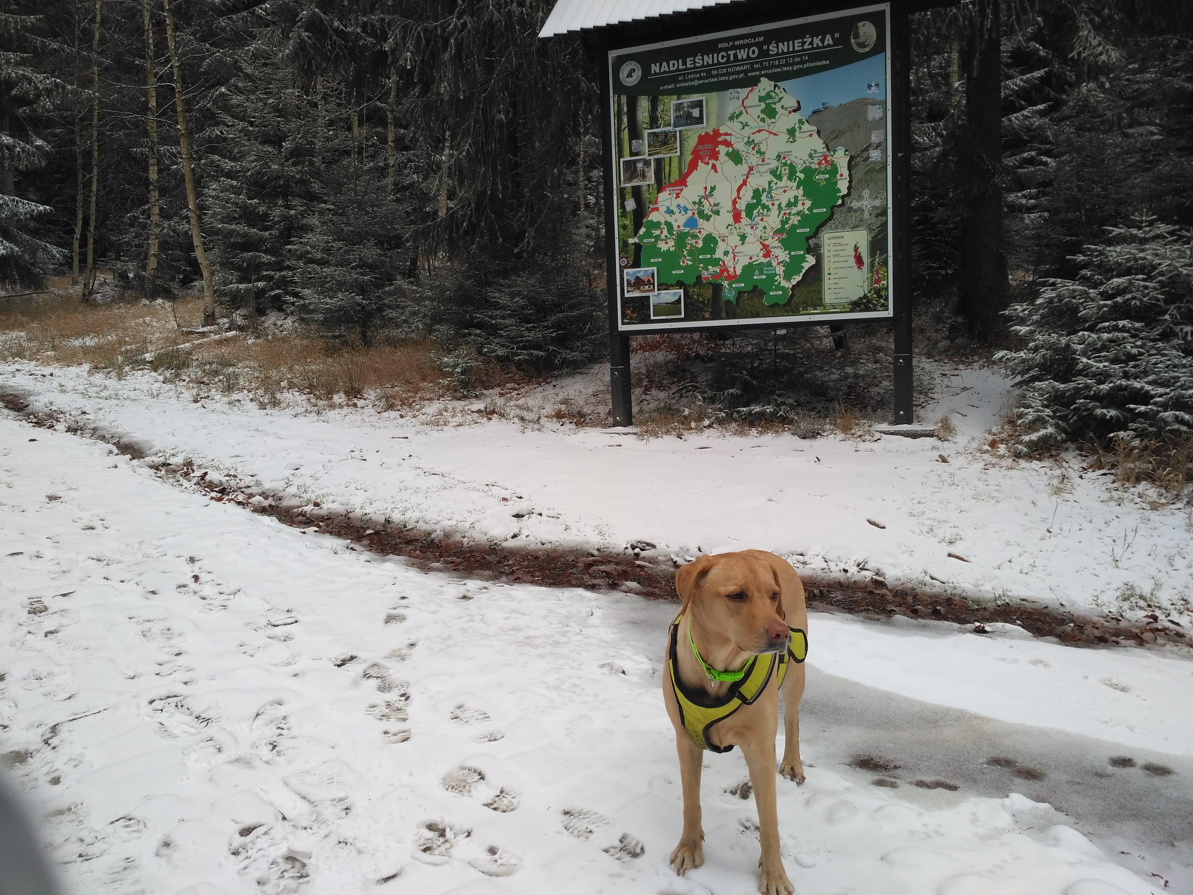 Nadleśnictwo Śnieżka