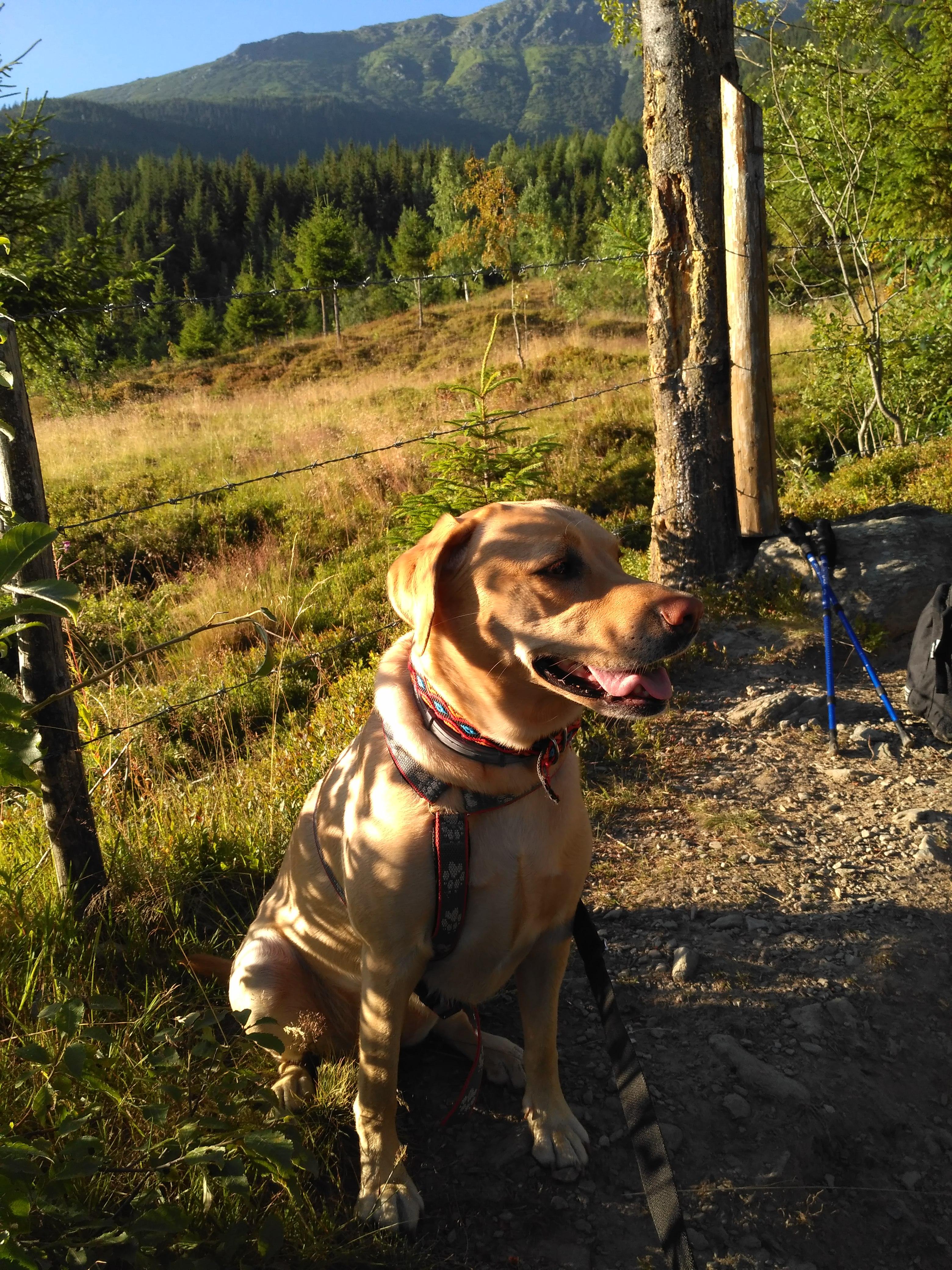 Sunny na górskim spacerku