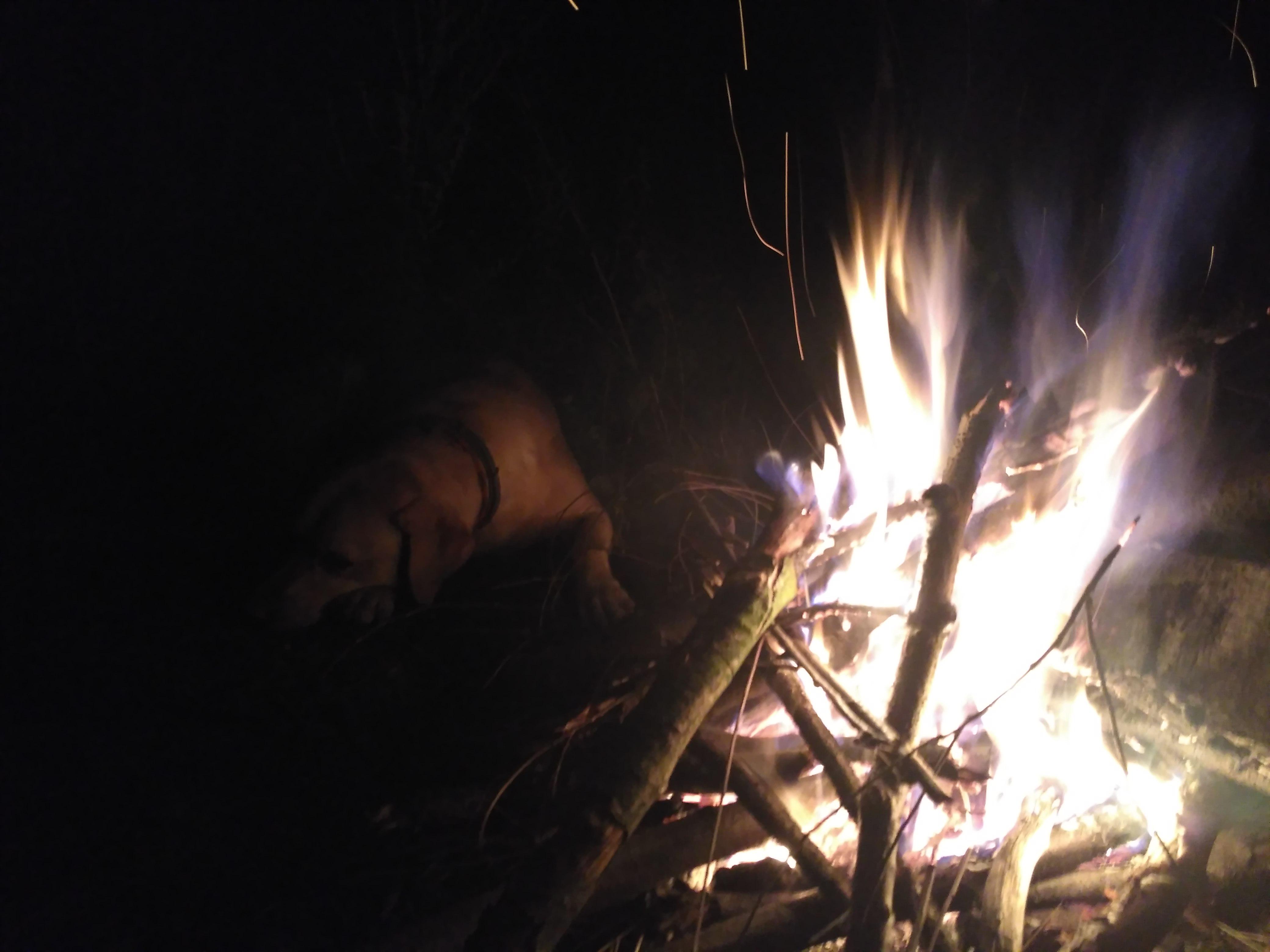 Psi wypoczynek przy cieplutkich płomieniach