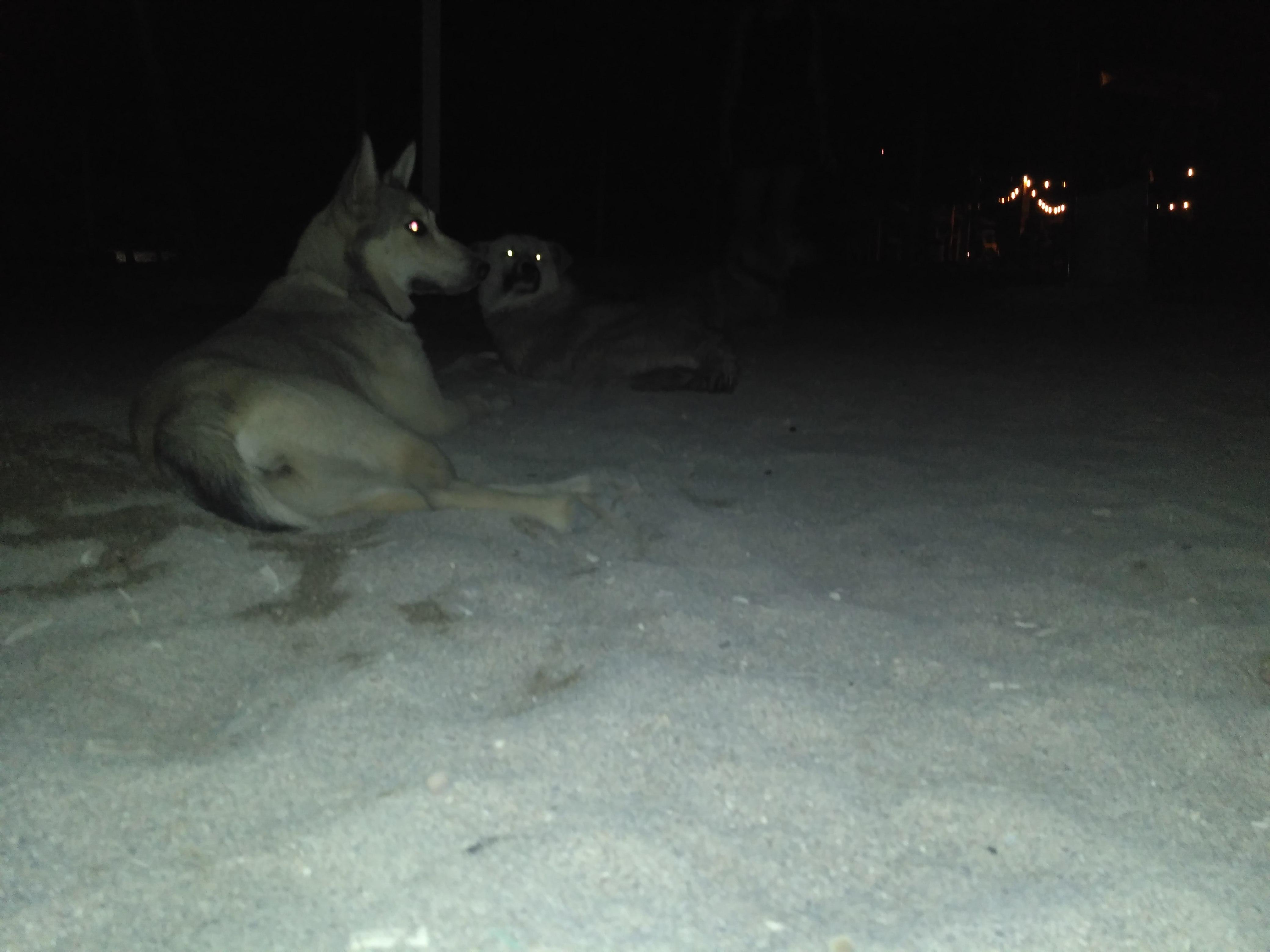 Psi wypoczynek na plaży