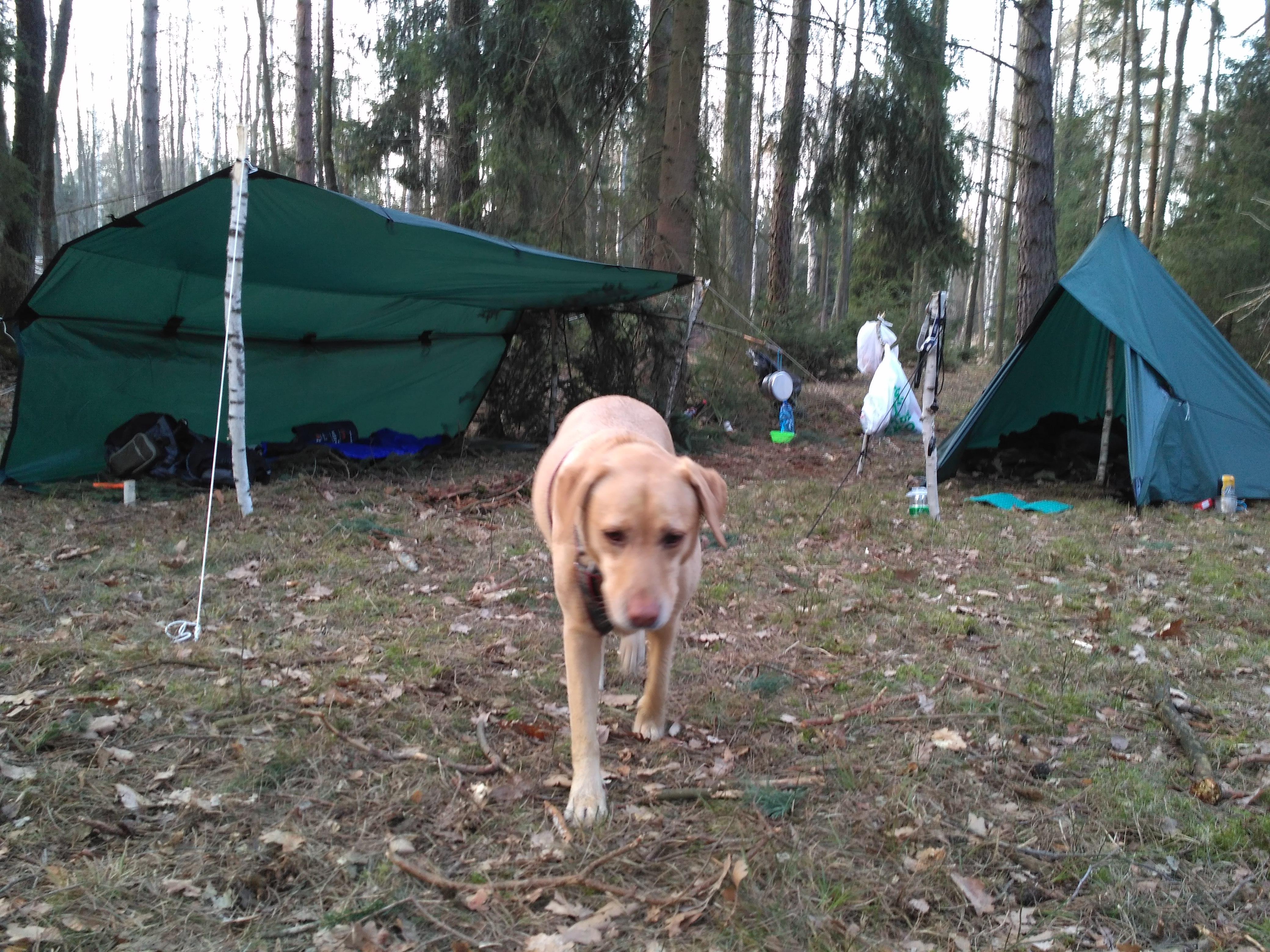 Psi towarzysz obozowego życia.