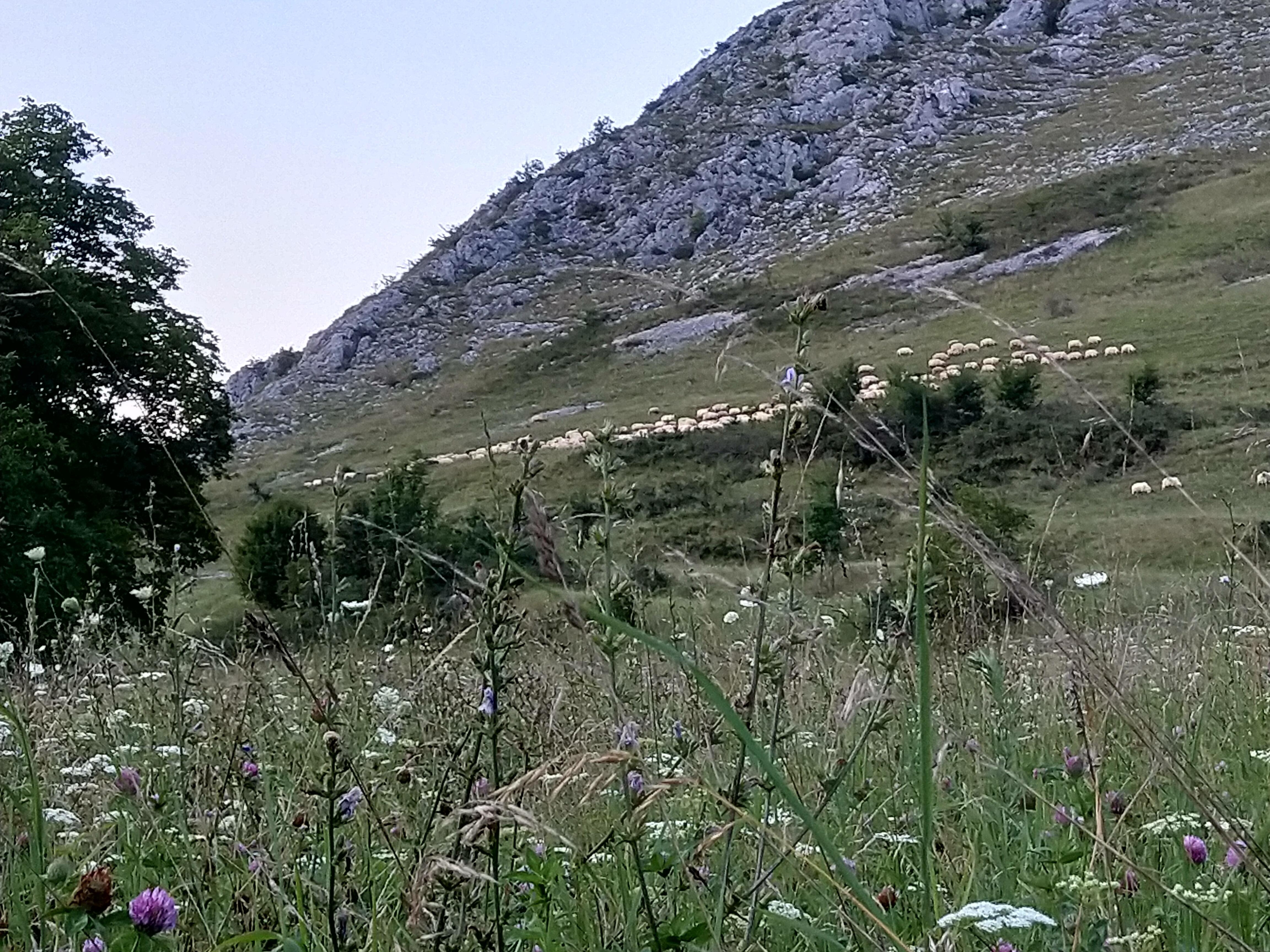 Tylko słońce zaszło i stok góry spowił piękny widok wypasania owieczek