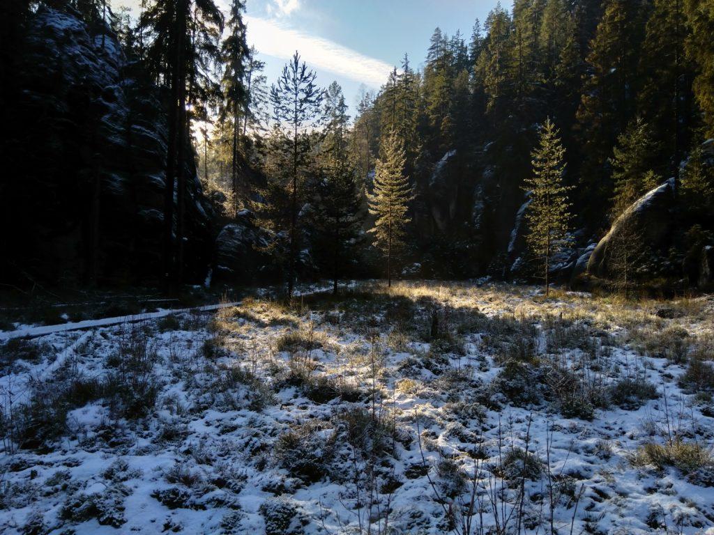 Malownicza polanka w lesie