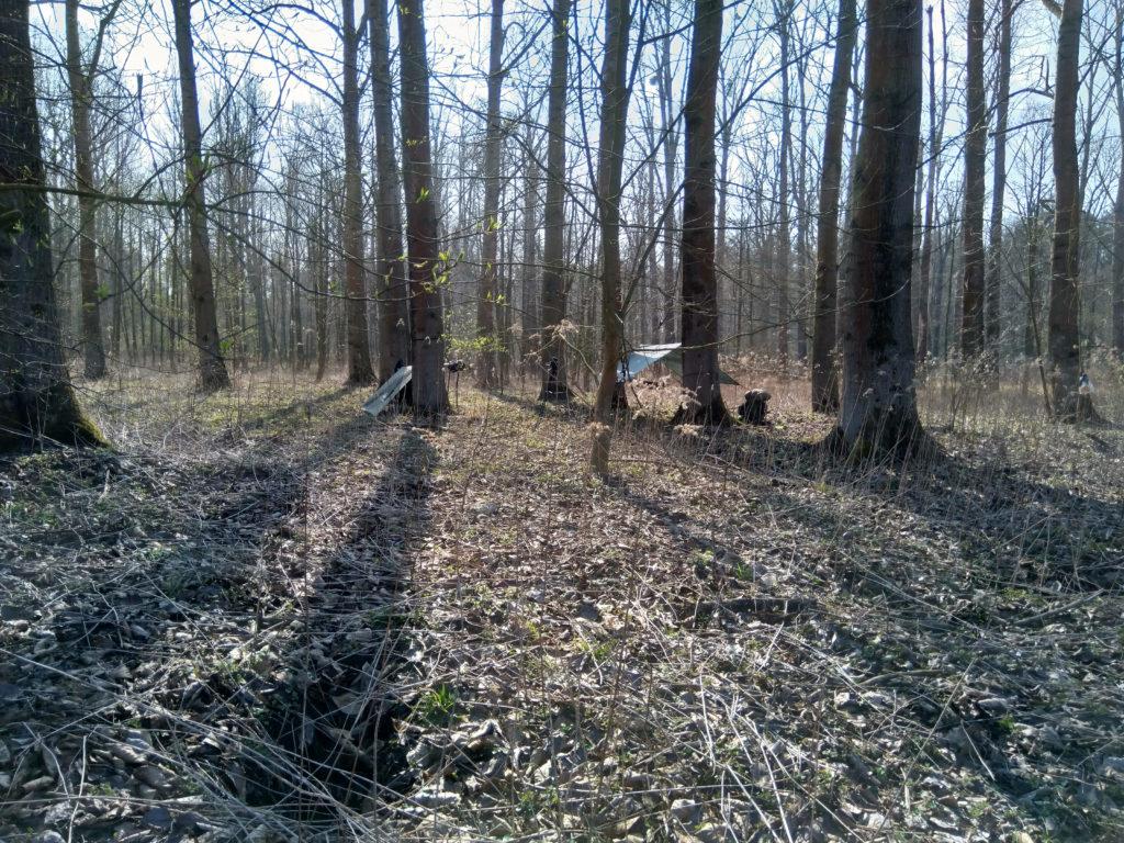 Obóz w leśnej perspektywie