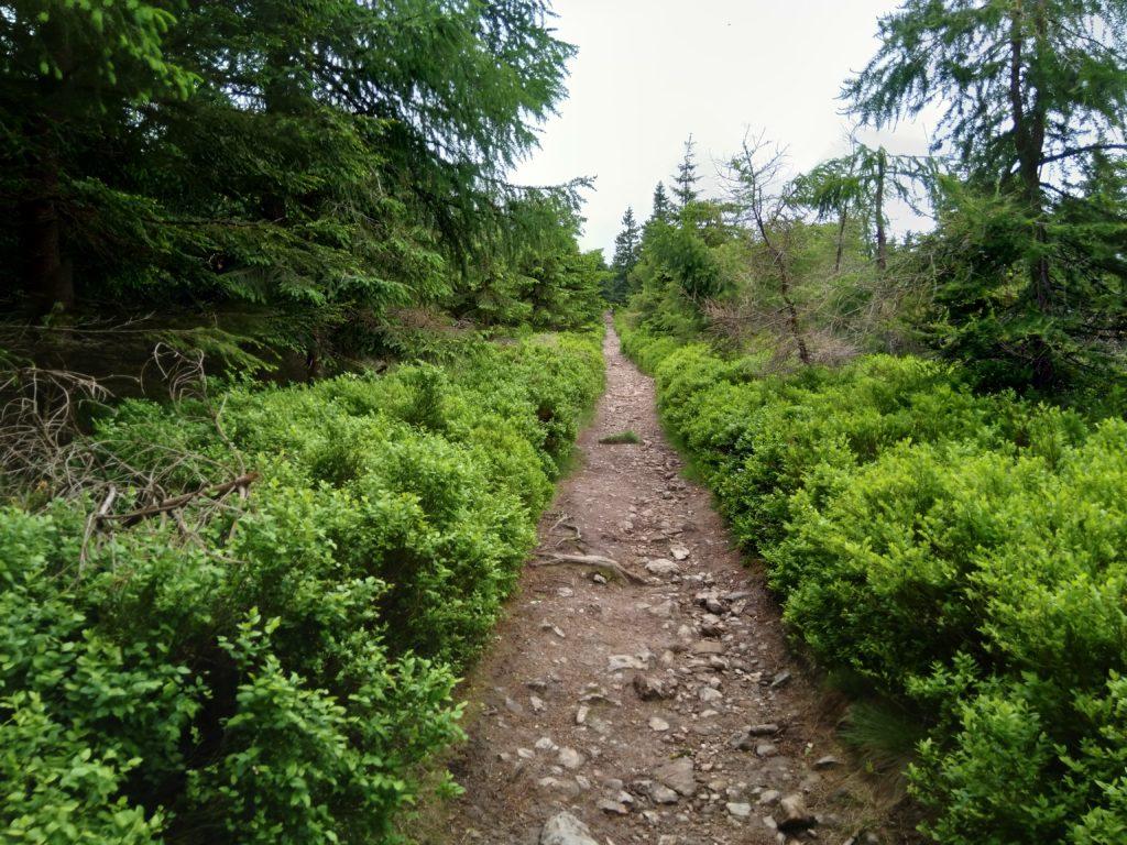 Szlak, na który nie wjedzie samochód jest zawsze bardziej egzotycznym szlakiem.