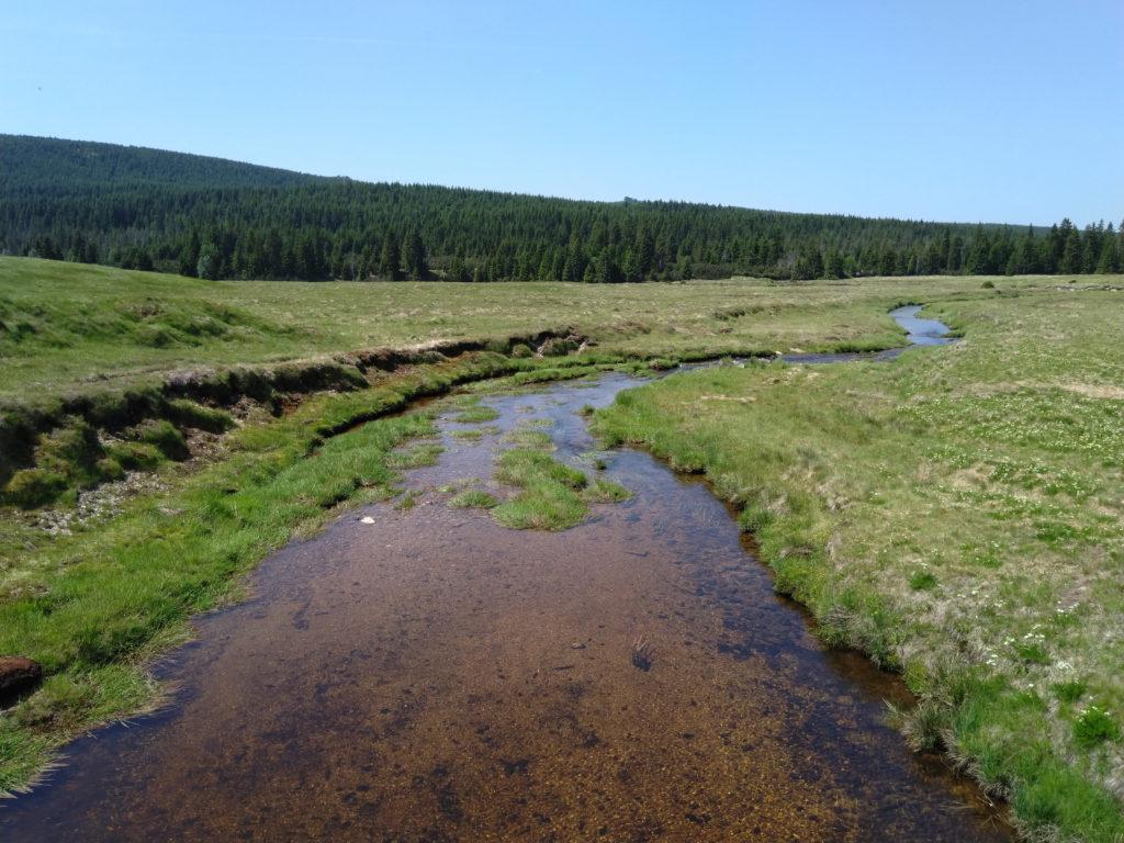 Jagnięcy potok