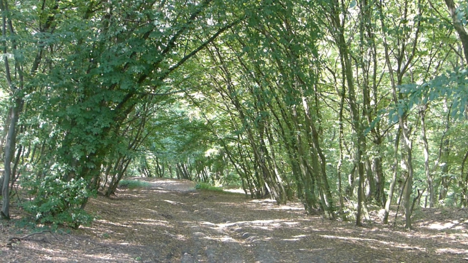 Hoia Baciu - najbardziej przerażający las