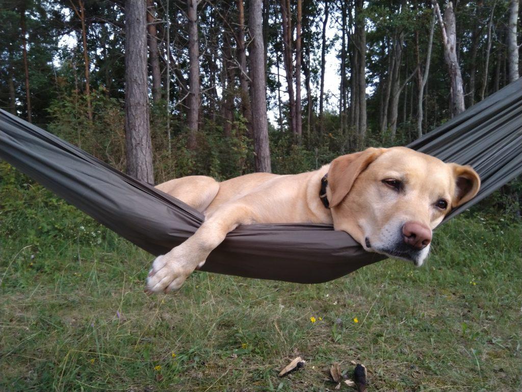 Hamakowy pies