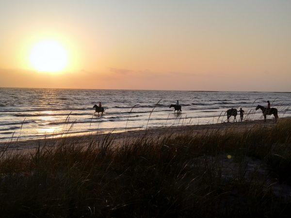 O zachodzie słońca cztery panie wybrały się na konną przejażdżkę