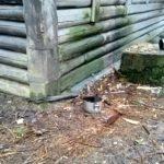 W centralnej części zdjęcia znajdziecie dwa mysie ryjki :)