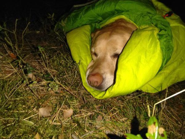 Wieczorem trochę posiedzieliśmy na trawce i zrobiło się sennie