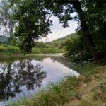 Blisko ujścia Kwisy do Jeziora Złotnickiego