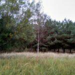 Ten las graniczy z Zalewem Wiślanym