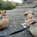 Czekamy na zakwaterowanie w Bacówce pod Honem