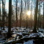 Gdzieniegdzie przebija się skromna pokrywa śnieżna