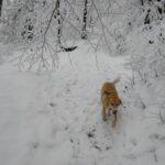 """""""Łaaa, mam śnieg na nosie"""""""