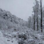 Las zimą cieszy oko